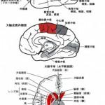 シニアと手と脳の話3