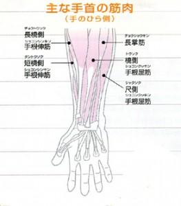 手首周りの筋肉図