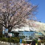 桜の季節のうんちく